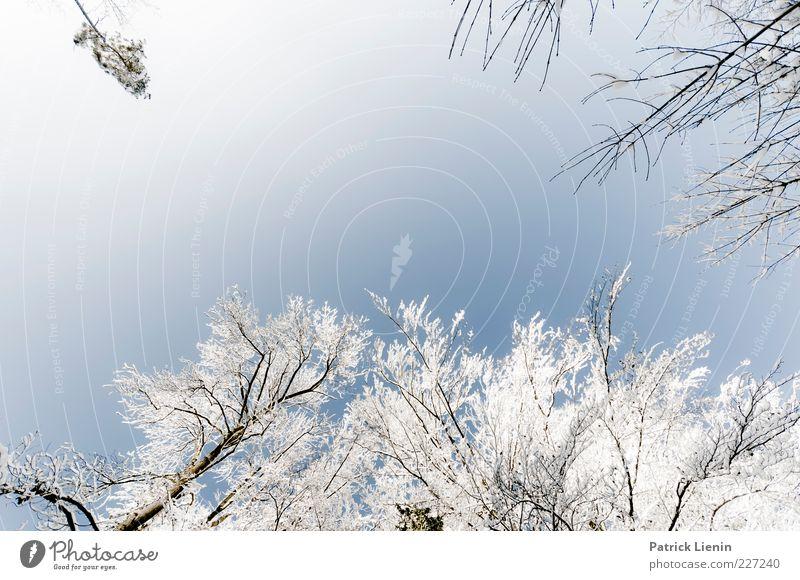 weiß-blau Himmel Natur Baum schön Pflanze Winter kalt Schnee oben Umwelt Luft Wetter hoch frisch