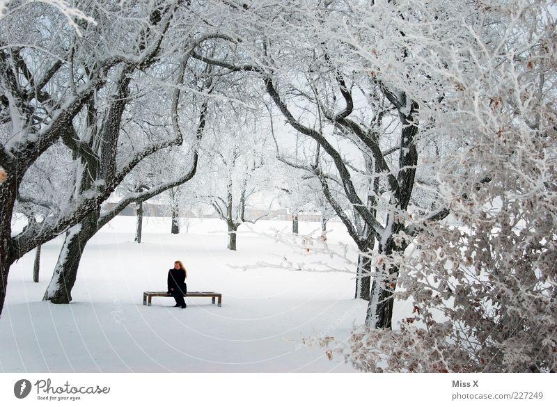 Versteckt ruhig Winter Frau Erwachsene 1 Mensch Natur Eis Frost Schnee Baum Park sitzen weiß Bank warten Parkbank Ast Raureif Farbfoto Außenaufnahme Tag
