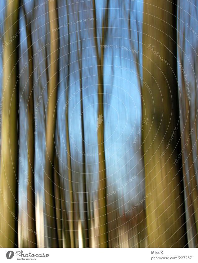 Schwenk Natur blau Baum Wald Bewegung braun Baumstamm Dynamik Bewegungsunschärfe
