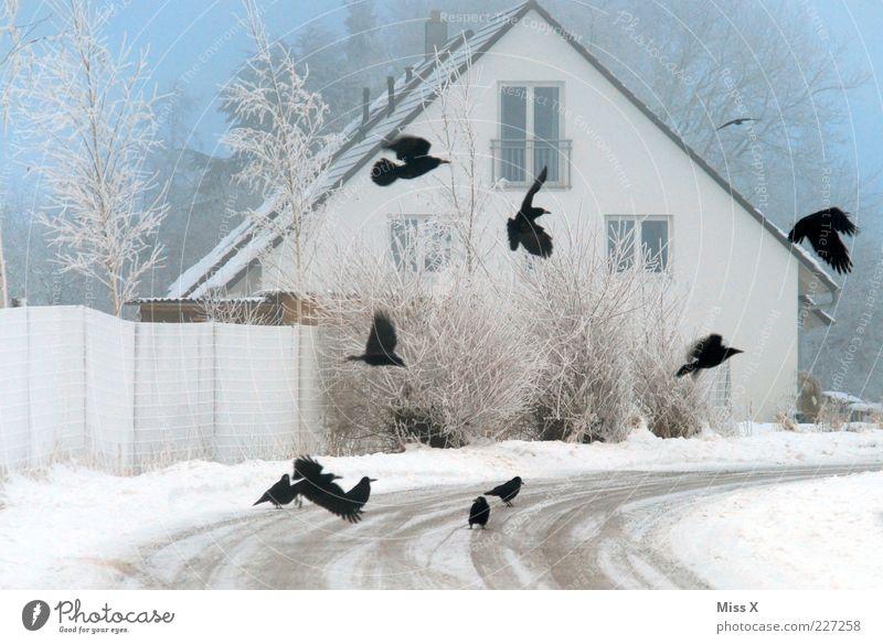 Krähen Tier Winter schlechtes Wetter Nebel Eis Frost Schnee Baum Sträucher Haus Einfamilienhaus Straße Wege & Pfade Wildtier Vogel Flügel Schwarm fliegen kalt