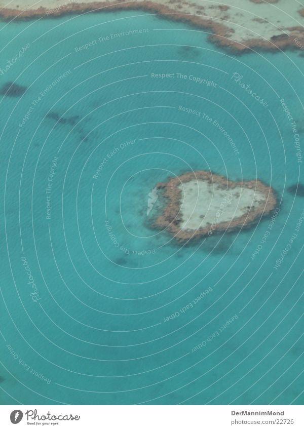 Herz des Ozeans Liebe Herz Tier Paradies Riff Korallen Great Barrier Reef