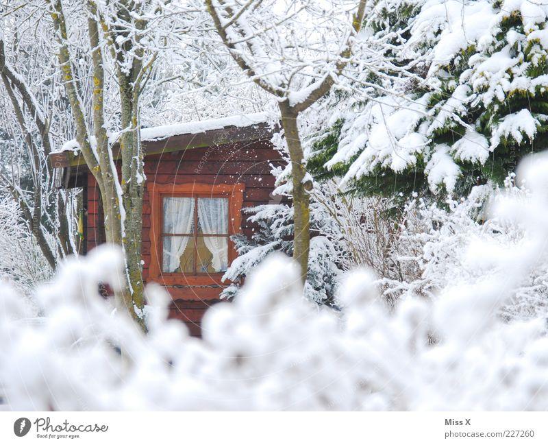 Versteckt II Garten Natur Winter Wetter Eis Frost Schnee Baum Sträucher Hütte Fenster kalt weiß Stimmung Schrebergarten Holzhaus Gartenhaus Märchenwald heimelig