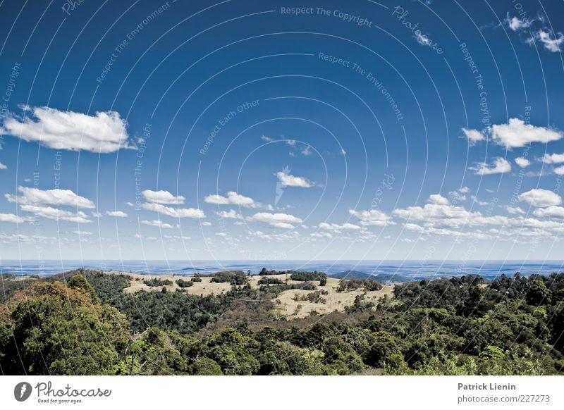 blue horizon Umwelt Natur Landschaft Pflanze Urelemente Luft Himmel Wolken Sonnenlicht Sommer Klima Wetter Schönes Wetter Baum Wald Hügel Berge u. Gebirge