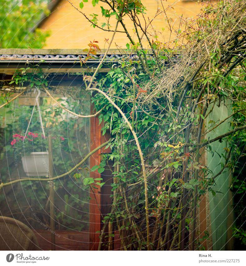 Opa's Gartenlaube grün Pflanze Freude Sommer Erholung Zufriedenheit authentisch Sträucher Rose Romantik einfach Idylle Lebensfreude Dorn Glasscheibe