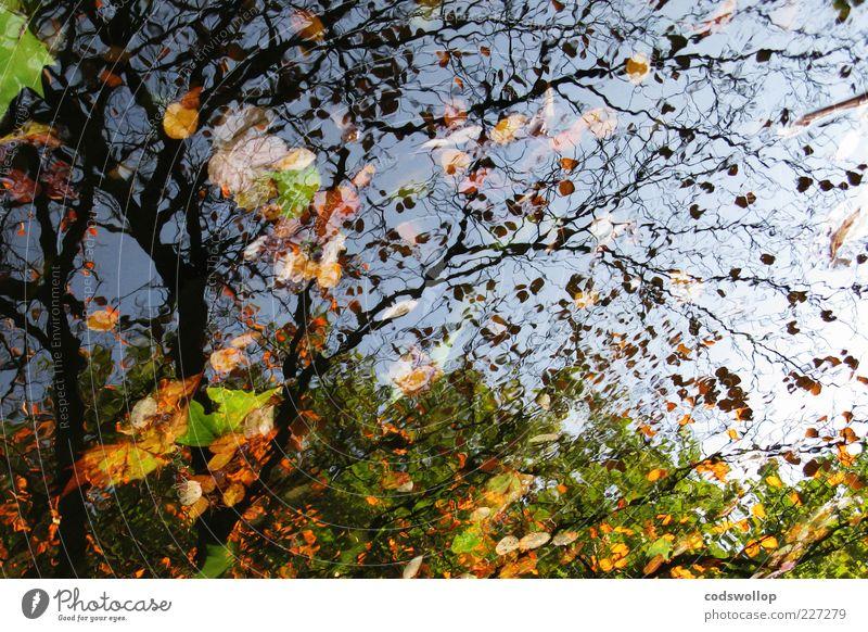 kuddelmuddelpuddle Umwelt Natur Himmel Herbst Baum See braun gelb grün Laubbaum Jahreszeiten Farbfoto Außenaufnahme Silhouette Reflexion & Spiegelung