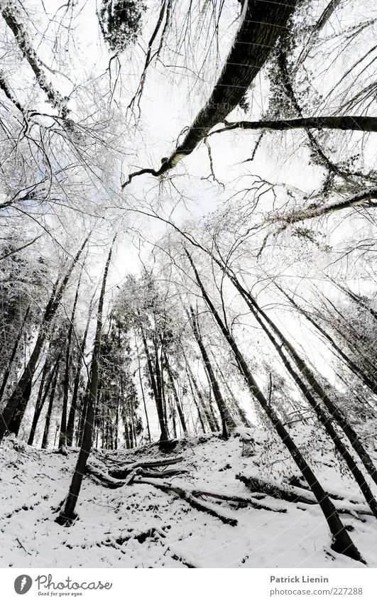 Bigger than us Natur weiß Baum Pflanze Winter schwarz Wald kalt Schnee Umwelt Landschaft Stimmung Wetter Urelemente außergewöhnlich Hügel
