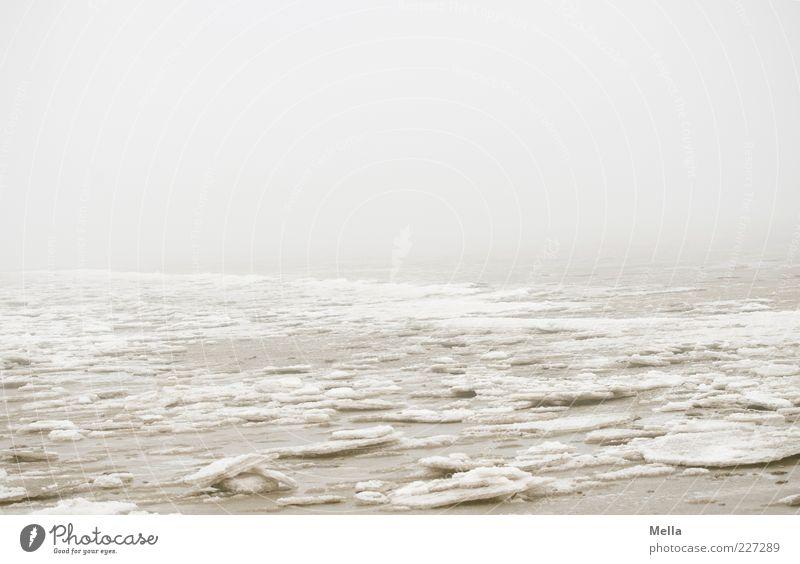 Eisland Umwelt Natur Landschaft Winter Klima Wetter Nebel Frost Küste Nordsee Meer kalt trist grau Stimmung Einsamkeit ruhig Eisscholle gefroren Farbfoto