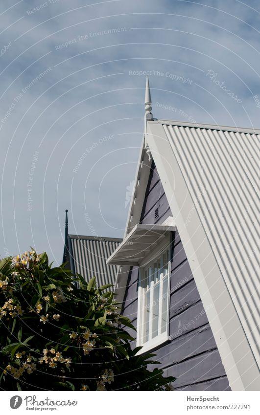 Frangipani in Balmain II Himmel schön Baum Sommer Haus Fenster Blüte Fassade Sträucher Dach Spitze Idylle Blühend Schönes Wetter Dachgiebel Sydney