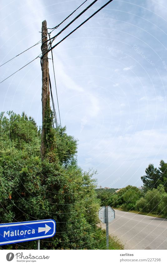da geht's lang Himmel blau grün Sommer Ferien & Urlaub & Reisen Straße Landschaft Tourismus Sträucher Kabel Hinweisschild Schönes Wetter Strommast Fernweh