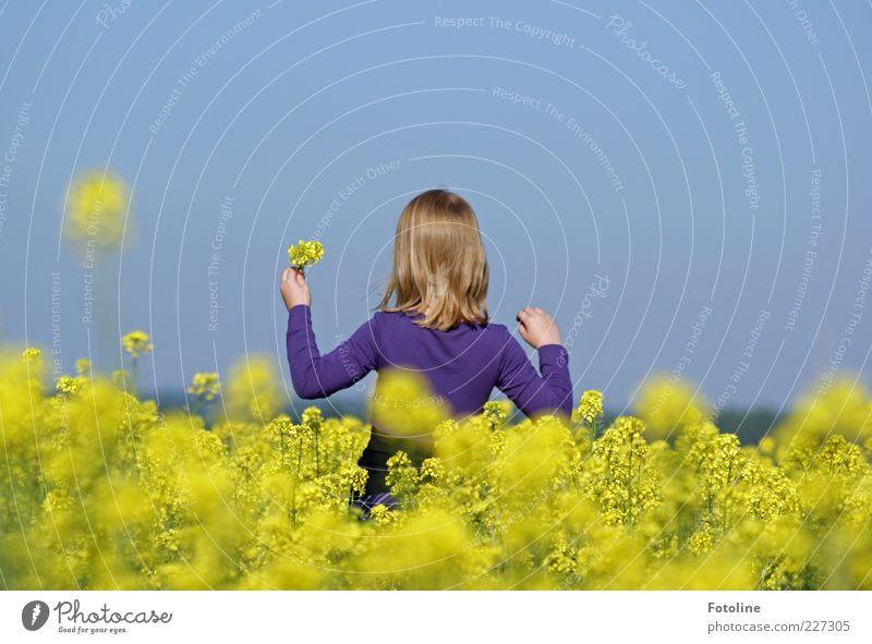 Hallo Sommer Natur blau Mädchen Pflanze gelb Umwelt Blüte hell Feld blond natürlich violett Raps pflücken Nutzpflanze