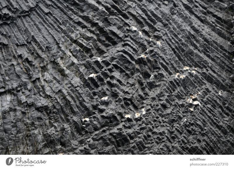 Sonne (mit Möwenkot) Natur schwarz Stein Felsen ästhetisch Urelemente außergewöhnlich eckig Berge u. Gebirge Vulkan Muster Naturphänomene Oberflächenstruktur Felswand vulkanisch
