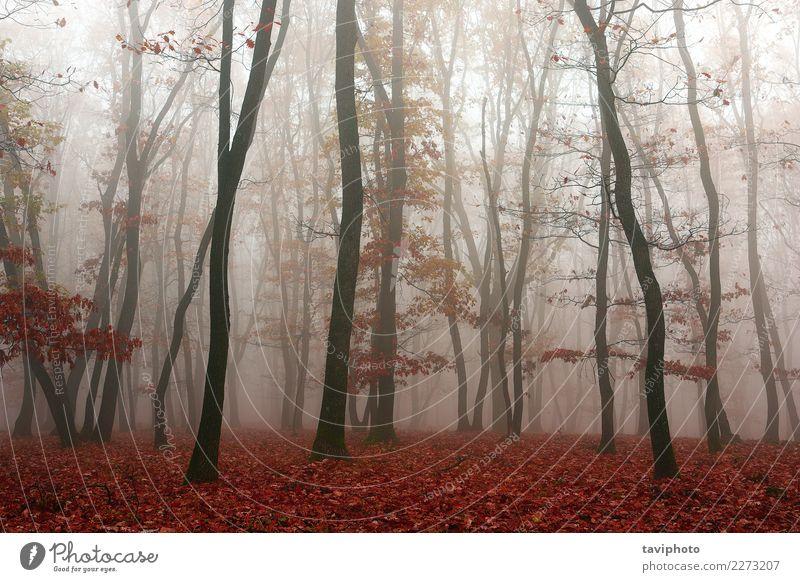 Nebel im Wald, Herbstsaison Natur Farbe schön Landschaft Baum rot Blatt dunkel gelb Umwelt Wege & Pfade natürlich Angst Park