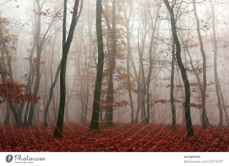 Nebel im Wald, Herbstsaison schön Umwelt Natur Landschaft Baum Blatt Park Wege & Pfade träumen dunkel natürlich gelb rot Angst Farbe geheimnisvoll Jahreszeiten