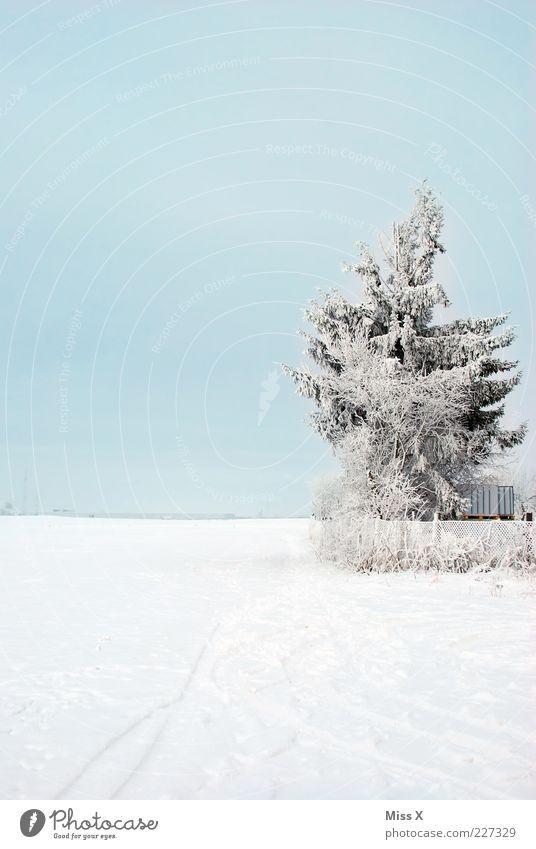 Kalt Natur Wetter Schönes Wetter Eis Frost Schnee Baum Wiese Feld kalt weiß Raureif Zaun Gartenzaun Tanne Winterstimmung Wintertag Schneelandschaft Farbfoto