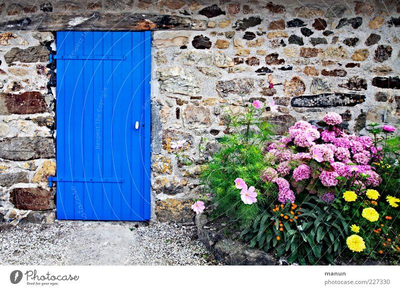 Frisch gestrichen blau schön Ferien & Urlaub & Reisen Blume Haus Wand Holz Garten Architektur Mauer Stein Tür Fassade Tourismus natürlich einfach