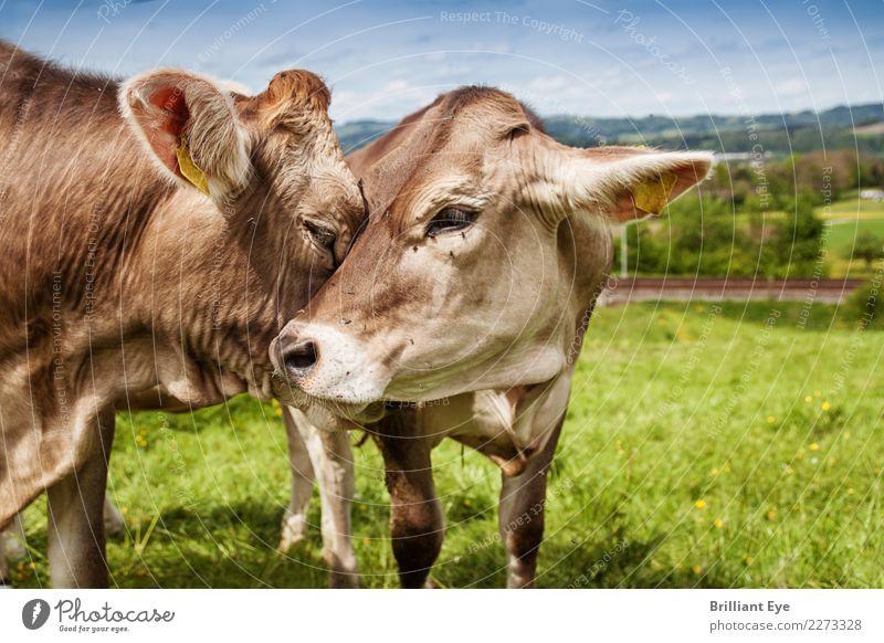Zuneigung Natur Sommer Landschaft Tier Liebe natürlich Gefühle Glück Zusammensein Freundschaft Zufriedenheit Feld Tierpaar Kommunizieren Idylle Warmherzigkeit