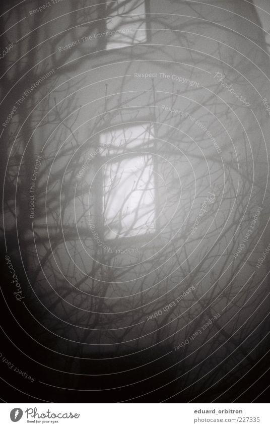 cold ascending Winter Baum Haus Fassade Fenster dunkel gruselig Einsamkeit Endzeitstimmung Surrealismus Trauer Schwarzweißfoto Außenaufnahme Menschenleer Nacht