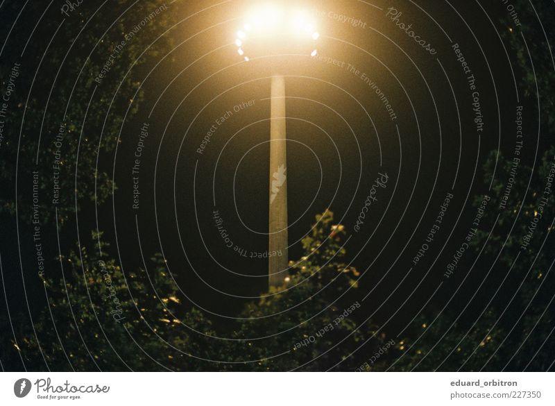 Origin Baum Sträucher dunkel Laterne Ufolampe UFO majestätisch Farbfoto Außenaufnahme Menschenleer Textfreiraum links Textfreiraum rechts Nacht Kunstlicht Licht