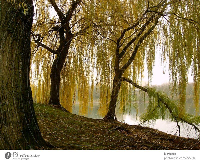 Verlassener Park II Natur Wasser Baum Einsamkeit gelb Herbst See Park braun Seepark
