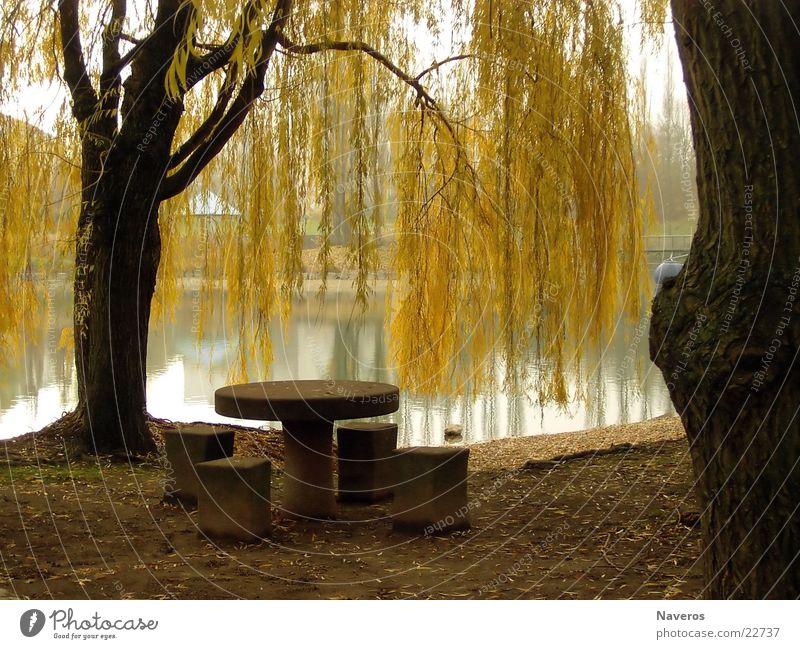 Verlassener Park I Natur Wasser Baum Einsamkeit gelb Herbst See Park braun Tisch Seepark