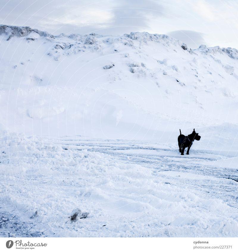 Black < White Himmel Natur Winter ruhig Einsamkeit Schnee Freiheit Umwelt Berge u. Gebirge Landschaft Wege & Pfade Hund Eis Abenteuer ästhetisch Suche