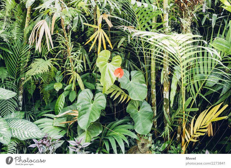 Indonesischer Garten Natur Pflanze grün Baum rot Blatt Blüte Gras Park Sträucher Insel Abenteuer exotisch Urwald Moos