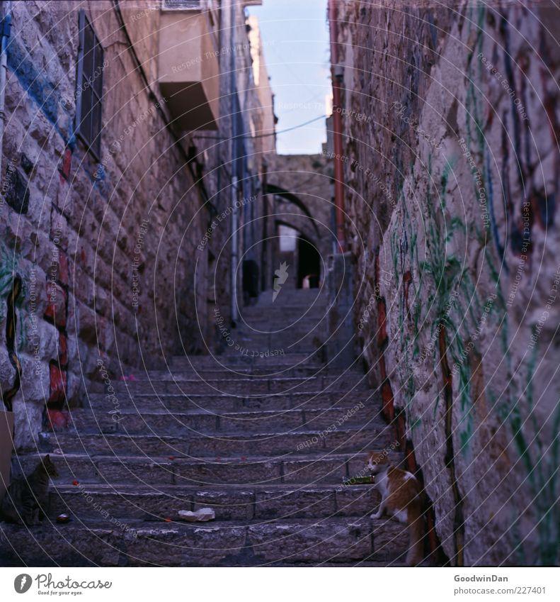 Die Stadt der Katzen alt Stadt ruhig Haus Tier dunkel Wand Mauer Stein Stimmung Katze dreckig elegant Fassade Treppe trist