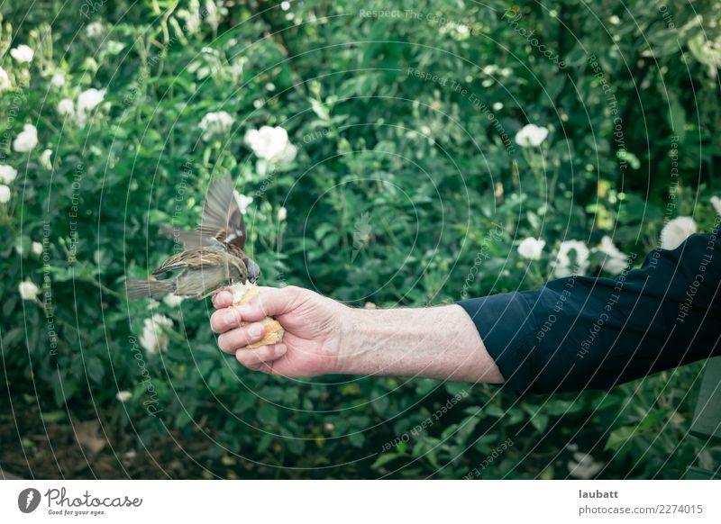 Tier Essen Spielen Feste & Feiern Vogel Wildtier Kommunizieren genießen beobachten festhalten Taube sparen füttern Haussperling