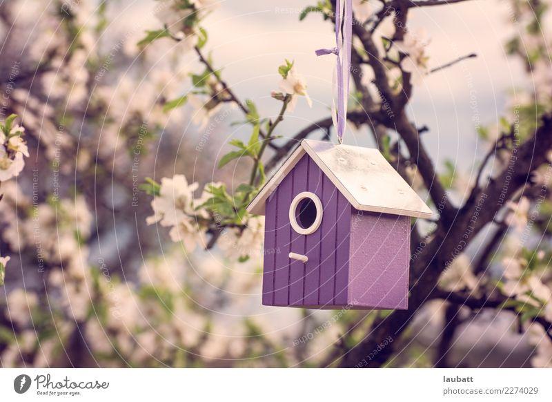 Frühlings-Vogelhaus Natur Baum Blume Kirschblüten Kirschbaum Mandelblüte Mandelbaum Wildtier Futterhäuschen fangen füttern Freundlichkeit Fröhlichkeit retro