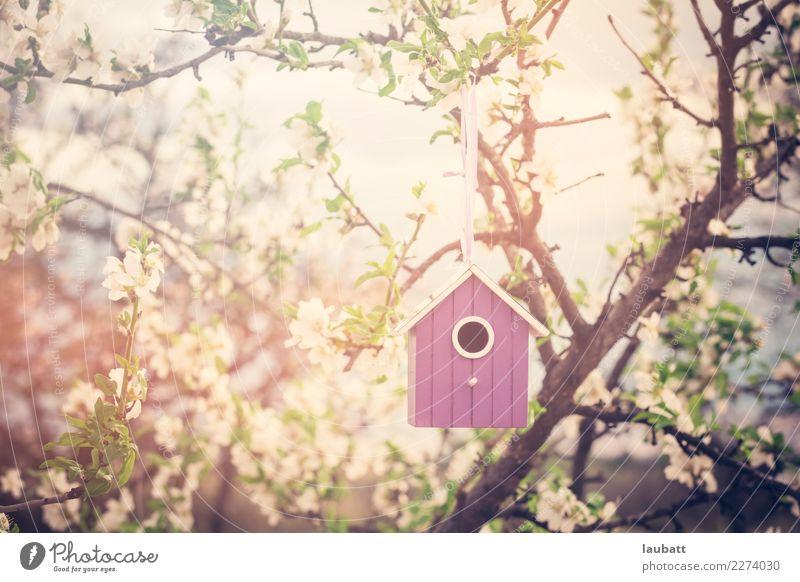 Vogelhaus in Blütezeit Freude heimwerken Umwelt Natur Blume Mandelbaum Sakura Hanami Kirschbaum Beginn Zufriedenheit Partnerschaft Erwartung Freundschaft