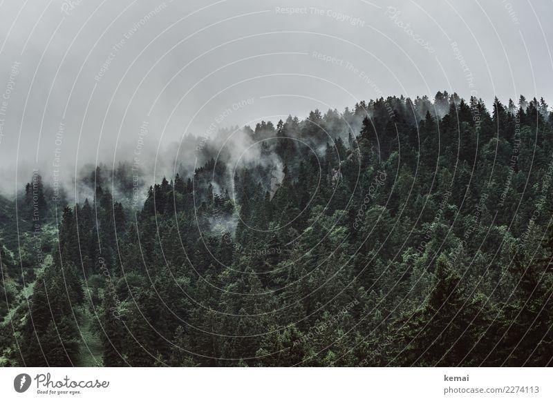 Nebel überm Wald Sinnesorgane ruhig Abenteuer Ferne Freiheit Umwelt Natur Himmel Wolken Wetter Regen Baum Hügel Berge u. Gebirge authentisch dunkel kalt grün