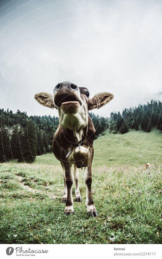 Hallo, Du! Himmel grün Landschaft Wolken Tier ruhig Wald Berge u. Gebirge natürlich Wiese Freiheit Ausflug Zufriedenheit wandern Wetter stehen