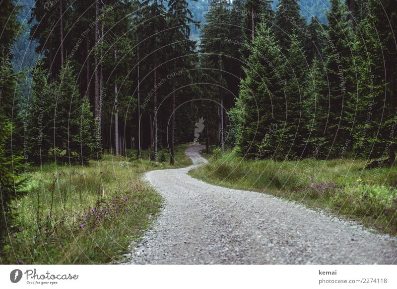 Ein Weg Natur Ferien & Urlaub & Reisen Pflanze grün Landschaft Baum ruhig Ferne Wald Umwelt Herbst Wege & Pfade Gras Freiheit Ausflug Freizeit & Hobby