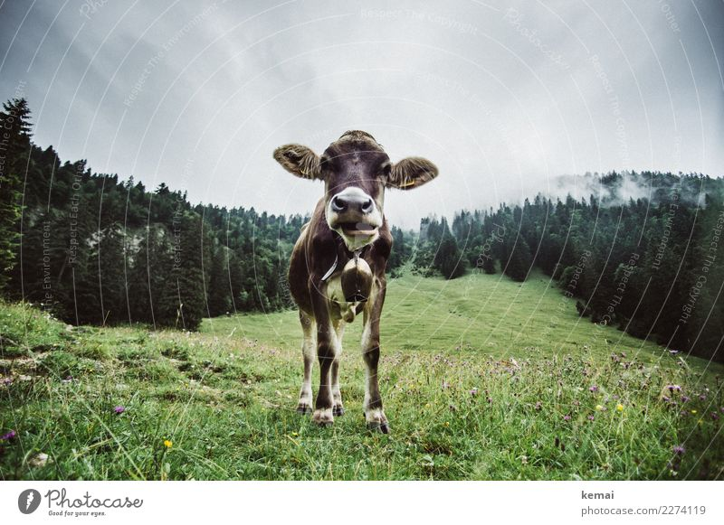 Ohren auf! Himmel Natur Ferien & Urlaub & Reisen grün Landschaft Tier Wolken ruhig Wald Berge u. Gebirge Umwelt Herbst lustig Gras Freizeit & Hobby wandern