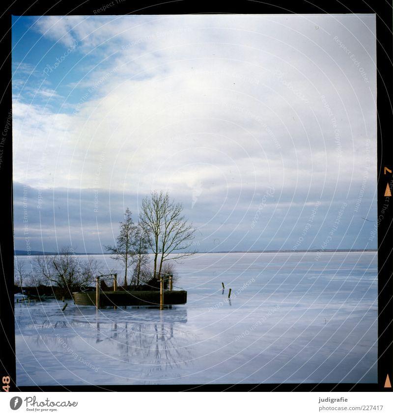 Steinhude Umwelt Natur Landschaft Wasser Winter Schönes Wetter Eis Frost Baum Küste Seeufer Steinhuder Meer kalt natürlich Stimmung Farbfoto Außenaufnahme