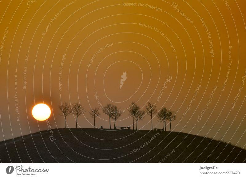Hannover, sonntags Natur Baum Sonne Winter dunkel Umwelt Landschaft Wärme Stimmung Park natürlich Hügel Abend laublos kugelrund