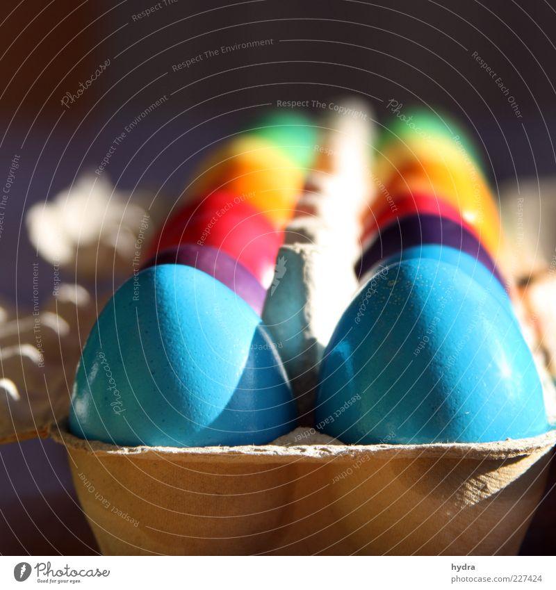 ab ins Körbchen blau grün rot Farbe gelb Frühling Feste & Feiern glänzend Ordnung Fröhlichkeit Dekoration & Verzierung Ostern violett lecker Ei Karton