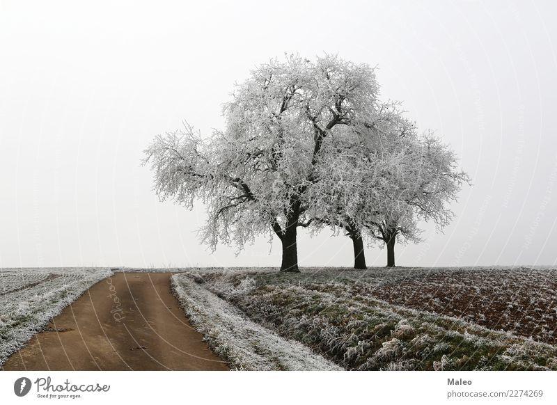 Frostiger Morgen kalt Schnee Baum Wege & Pfade Schneelandschaft Raureif Straße Eis Feld Winter Landschaft Landwirtschaft Heimat