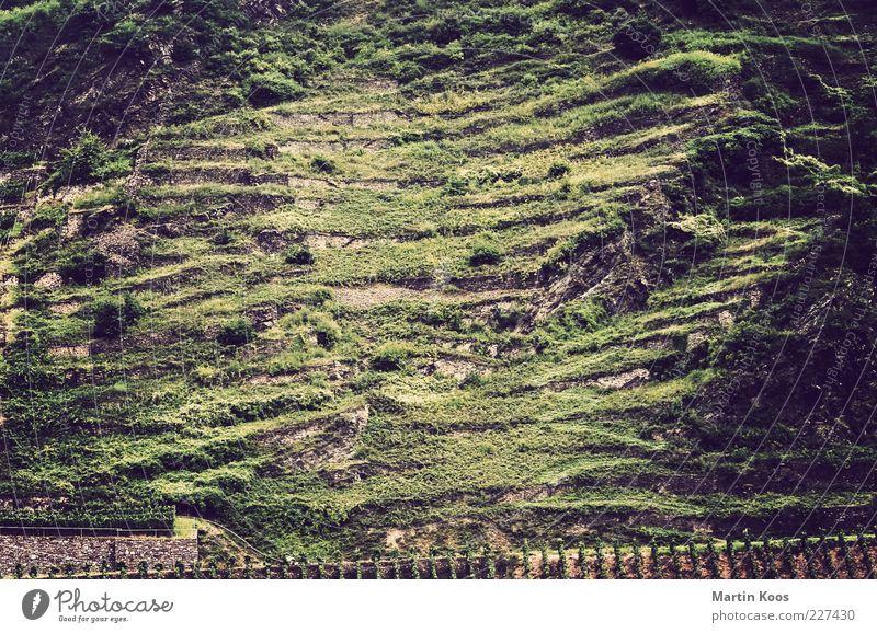 Hang zur Struktur Natur Landschaft Pflanze Nutzpflanze Hügel Felsen Berge u. Gebirge ästhetisch Weinbau Mosel (Weinbaugebiet) Weinberg Linie Streifen Farbfoto