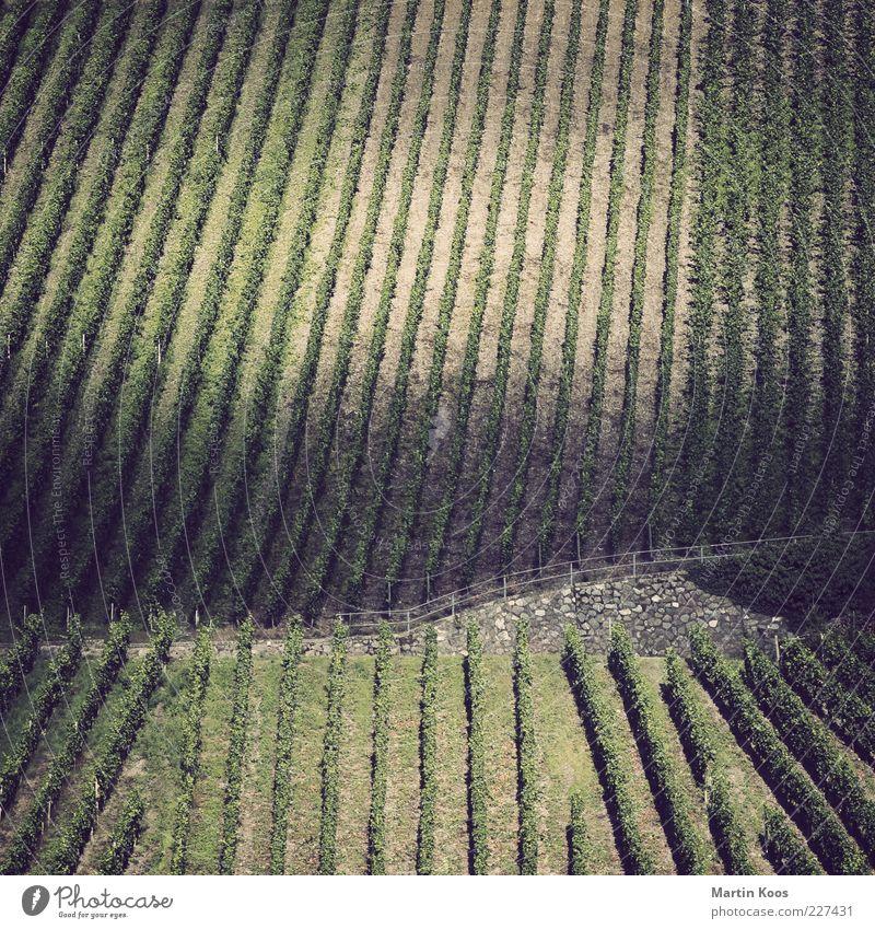 Hang zur Struktur II Landschaft Pflanze Nutzpflanze Hügel Weinbau Mosel (Weinbaugebiet) Weinberg Linie Streifen Farbfoto Gedeckte Farben Experiment Polaroid