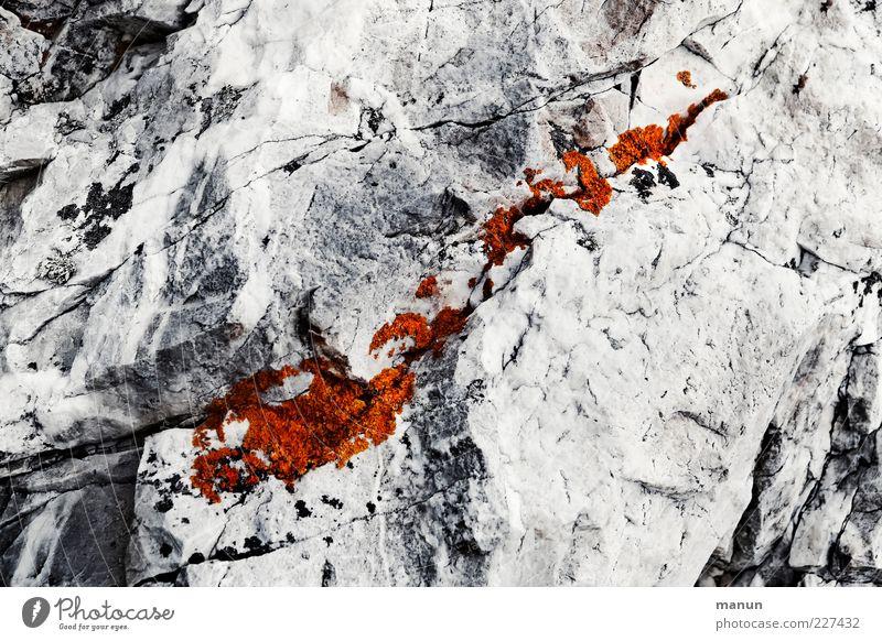 Lebensraum Natur weiß kalt grau Stein hell Felsen Wachstum authentisch silber eckig Überleben bescheiden Lebensraum Flechten