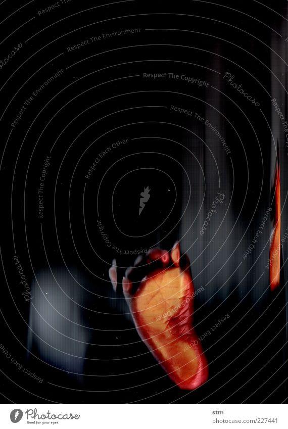 kleines wunder Leben Haut Fuß Zehen Zehenspitze 1 Mensch alt berühren laufen stehen Wachstum nah natürlich Sauberkeit weich Farbfoto Nahaufnahme Experiment