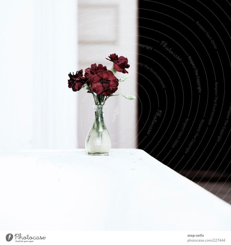 RBW Pflanze Blume Blüte leuchten ästhetisch modern rot Stil Vase Grafik u. Illustration High Key Ebene Leben Blumenstrauß Farbfoto Menschenleer Sauberkeit Glas