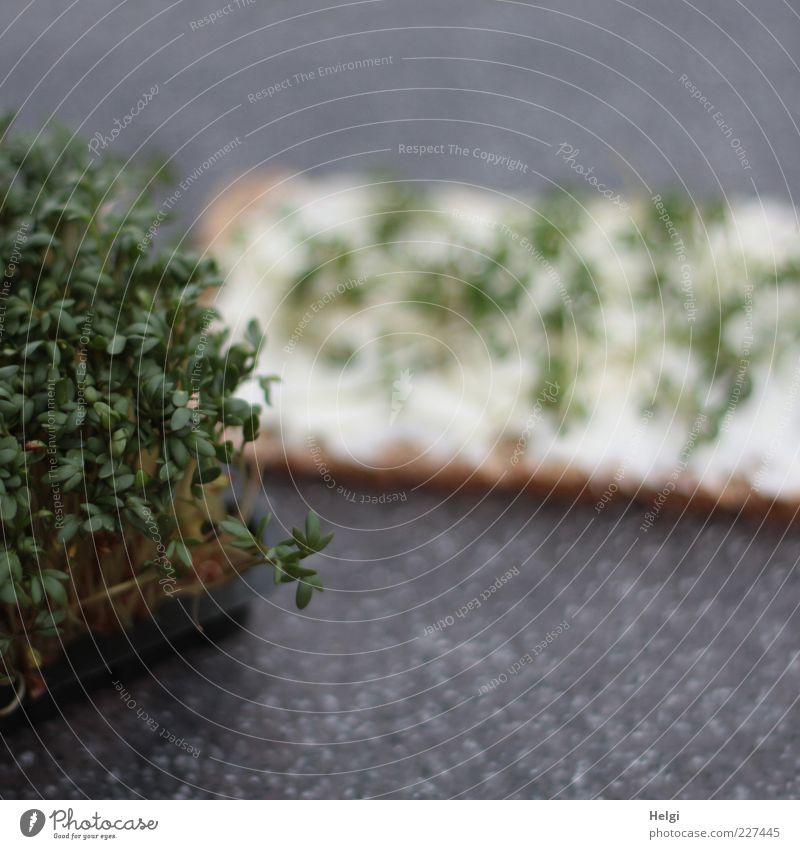 Frühjahrsdiät... Lebensmittel Milcherzeugnisse Kräuter & Gewürze Kresse Knäckebrot Brot Quark Ernährung Frühstück Bioprodukte Vegetarische Ernährung Diät