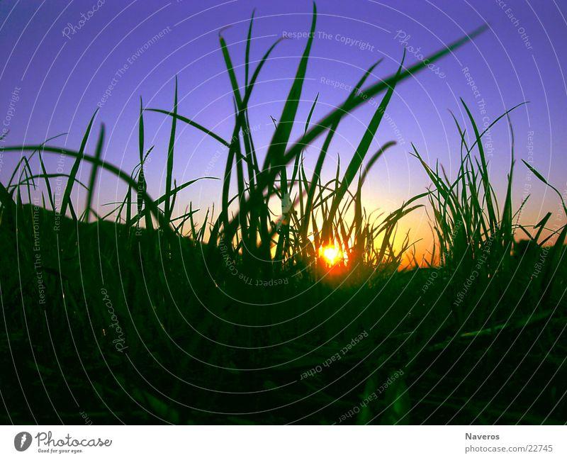Ameisenperspektive Himmel Natur grün blau schön Pflanze Sonne Sommer gelb Wiese Herbst Gras Frühling Erde Bodenbelag Rasen