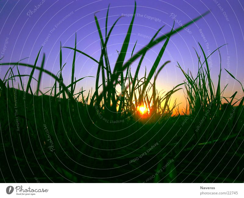 Ameisenperspektive Sonne Natur Pflanze Erde Himmel Wolkenloser Himmel Sonnenaufgang Sonnenuntergang Sonnenlicht Frühling Sommer Herbst Schönes Wetter Gras