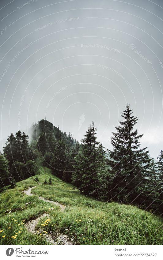 Hinauf Sinnesorgane ruhig Freizeit & Hobby Ausflug Abenteuer Ferne Freiheit Berge u. Gebirge wandern Natur Landschaft Himmel Wolken Wetter Nebel Baum Gras Wiese