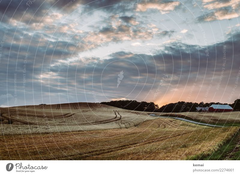 Dänisches Kornfeld harmonisch Wohlgefühl Zufriedenheit Sinnesorgane Erholung ruhig Abenteuer Ferne Freiheit Sommer Landschaft Himmel Wolken Schönes Wetter