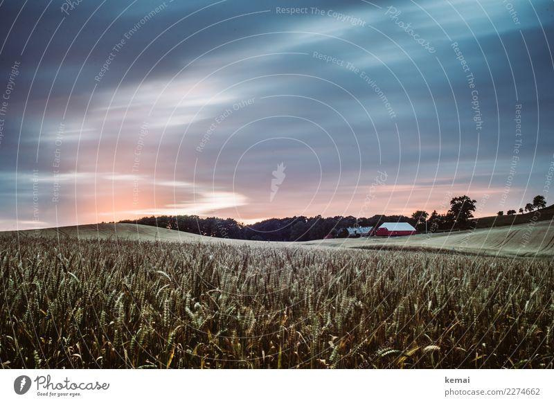 Abends in Dänemark Himmel Sommer Landschaft Haus Erholung Wolken ruhig Ferne Leben Freiheit Ausflug Zufriedenheit Feld Idylle Abenteuer authentisch