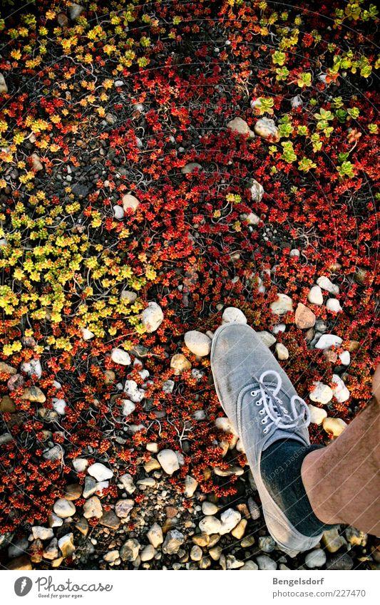 Tundra wandern Beine Fuß 1 Mensch Natur Pflanze Erde Gras Moos Strümpfe Schuhe Einsamkeit Umwelt mehrfarbig schreiten Stein losgehen Richtung unterwegs Bewegung